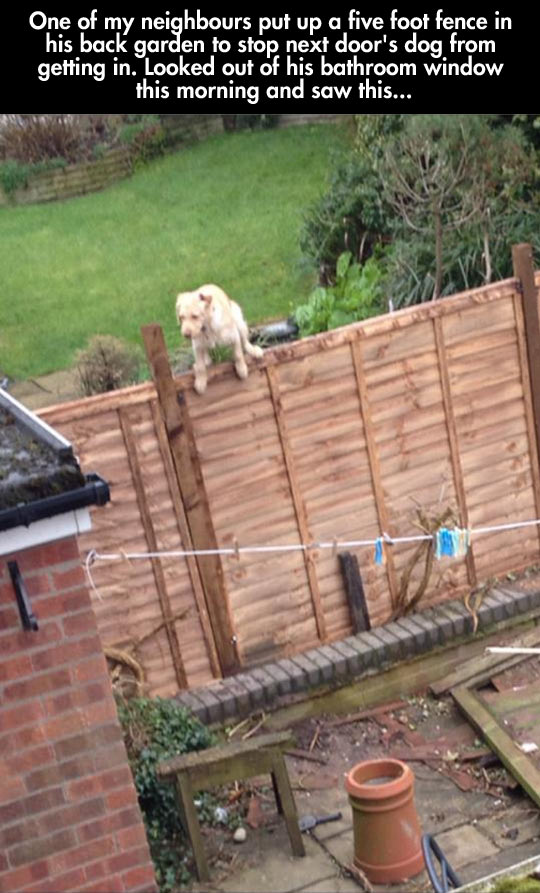 Unstoppable Dog