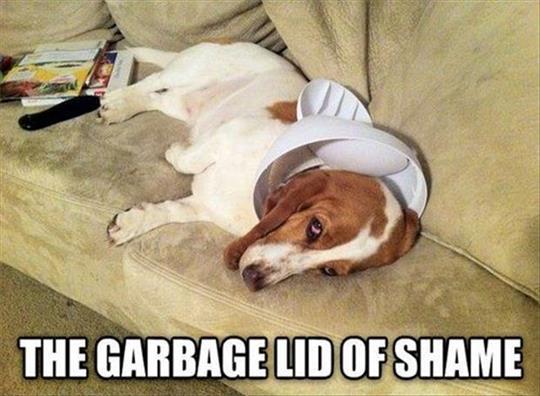 Garbage Lid