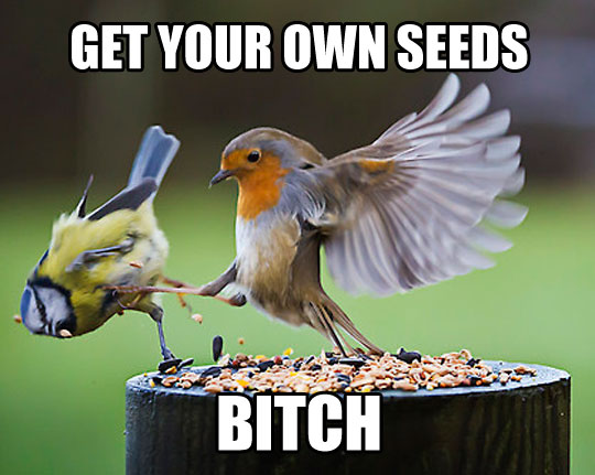 Get Your Own Seeds