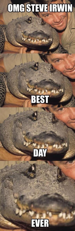 OMG Steve Irwin