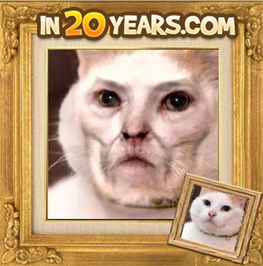 Pensioner Cat