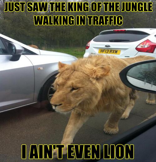 Traffic Lion