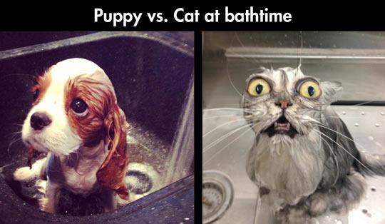 Puppy Vs Cat