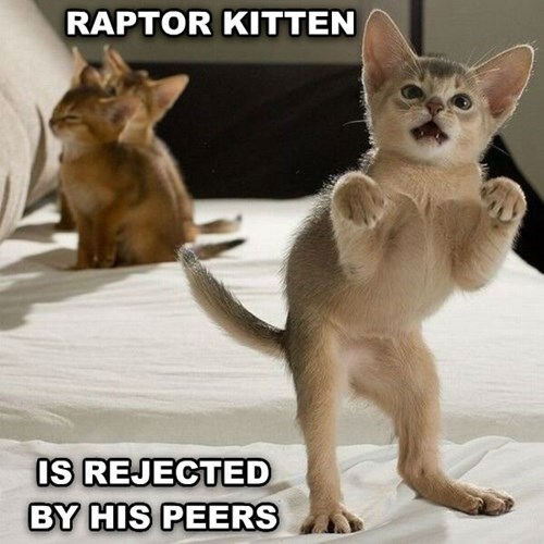 Raptor Kitten