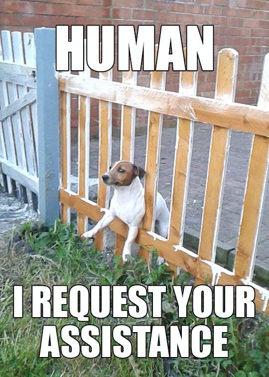 Human!