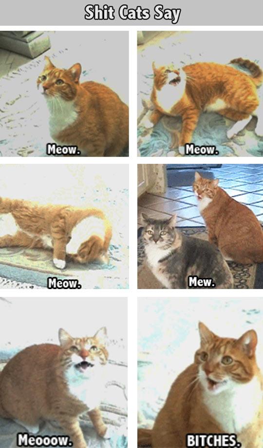 Sh*t Cats Say