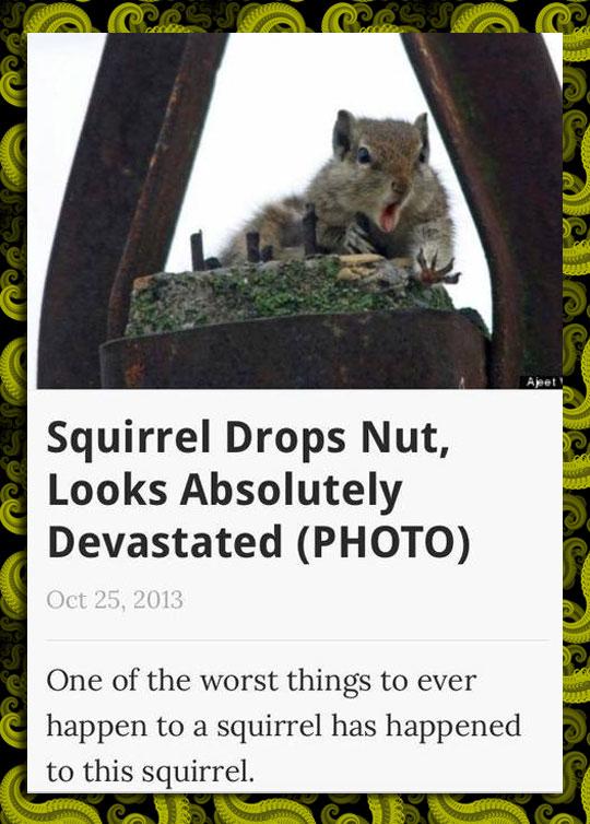 Squirrel Drops Nut