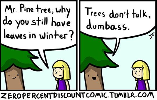 Mr Pine Tree