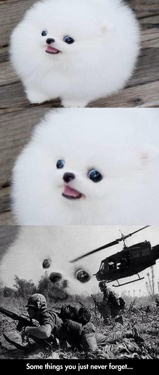 Flashback Dog
