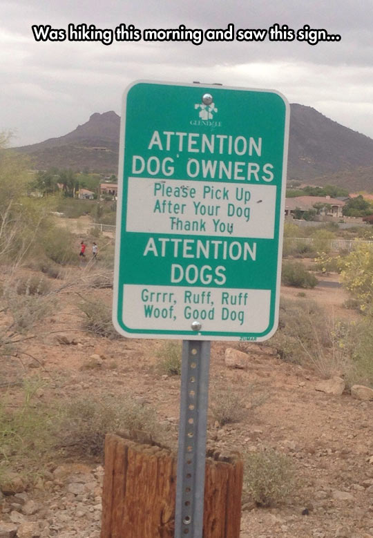 Attention Dogs