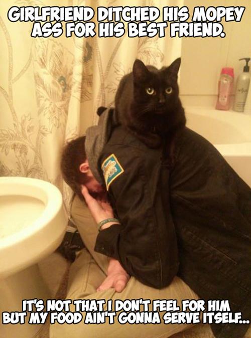 Uncaring Cat
