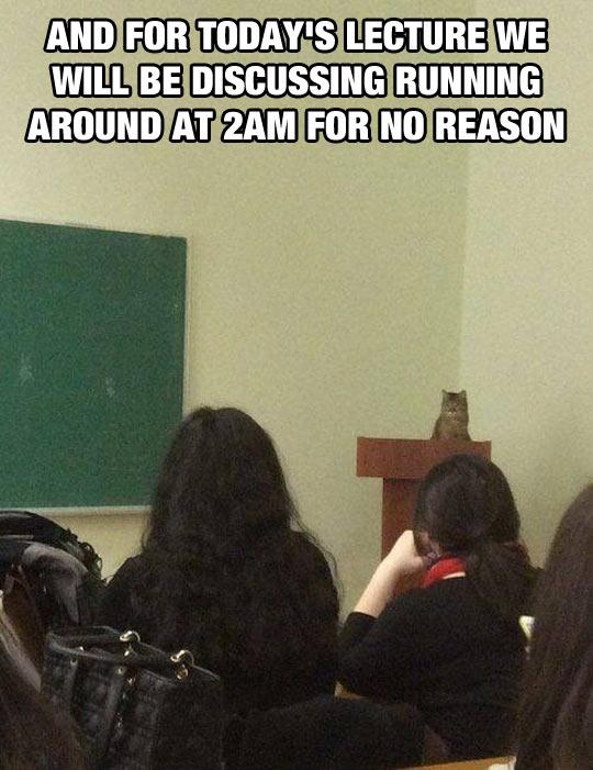 Cat College