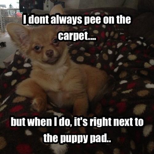Pee On The Carpet