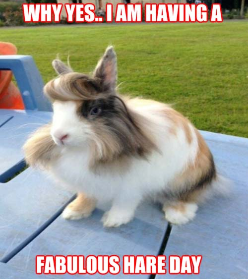 Fabulous Hare Day