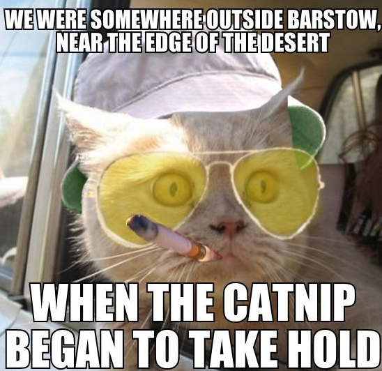 Fear & Loathing Cat