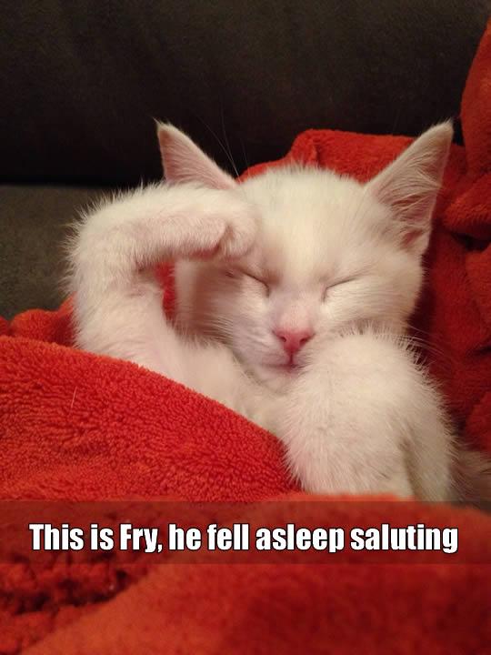 Fall Asleep Saluting