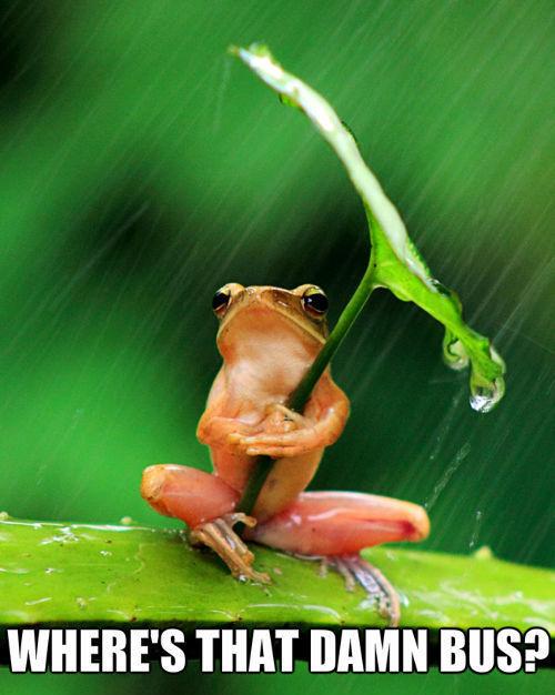 Wet Frog