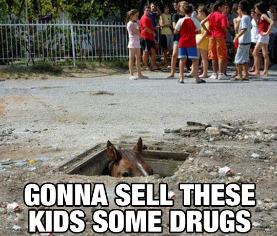 Dealer Horse