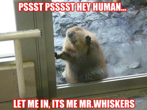 Hey Human...