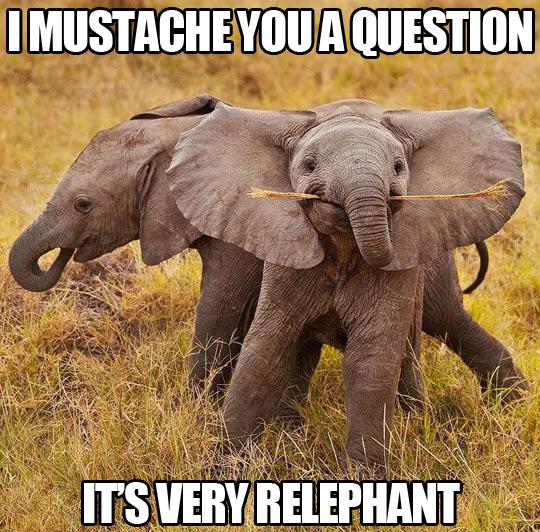 Relephant Question
