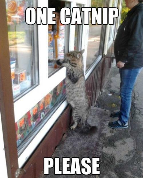 One Catnip