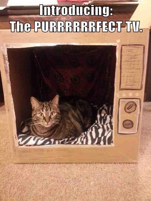 Purrfect TV