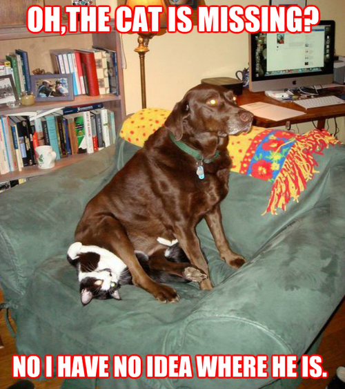 The Cat Is Missing?