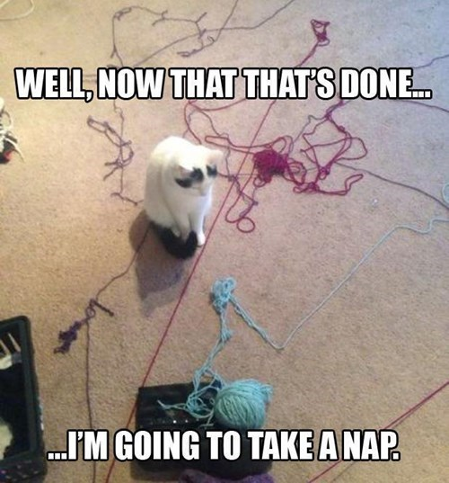 Busy Life Of A Cat