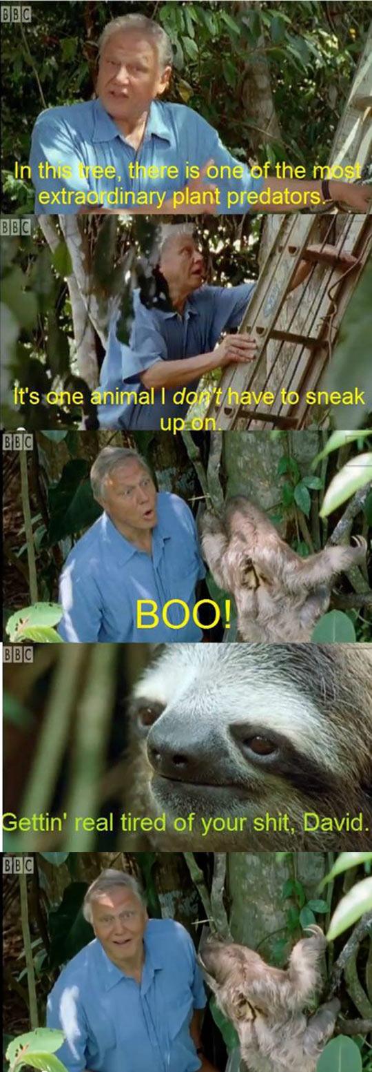 Sloth Harassment