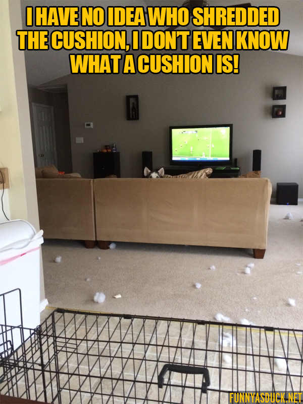 Shredded The Cushion