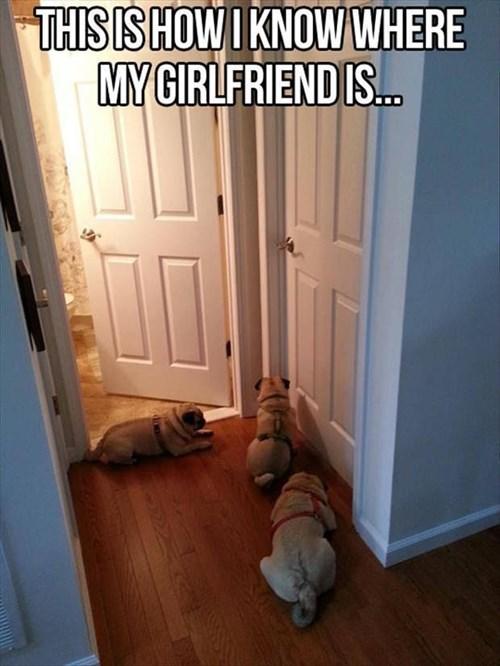 Stalker Dogs