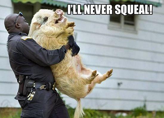 Pig Arrest