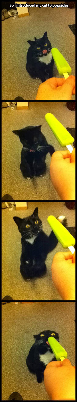 Cat Loves Popsicles