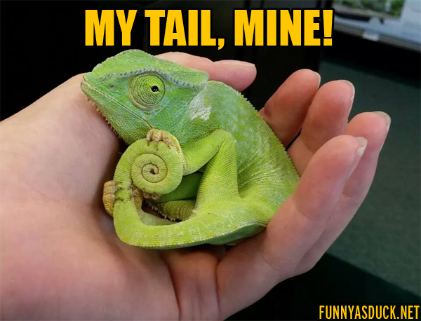 My Tail