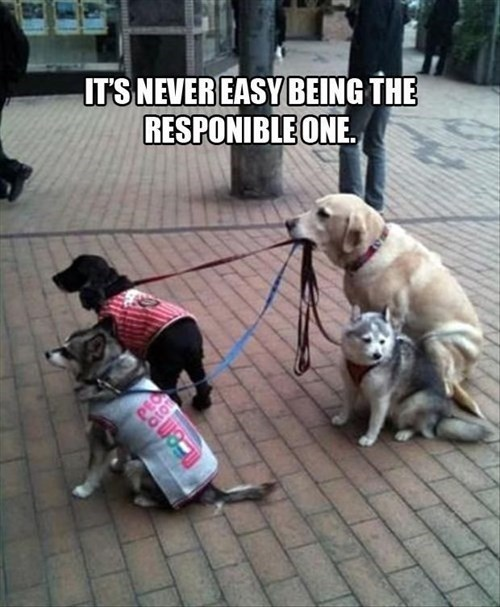 Responsible One