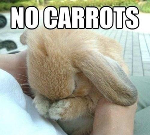 Poor Bunny