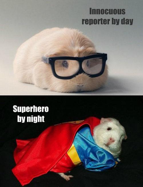 Super Guinea Pig