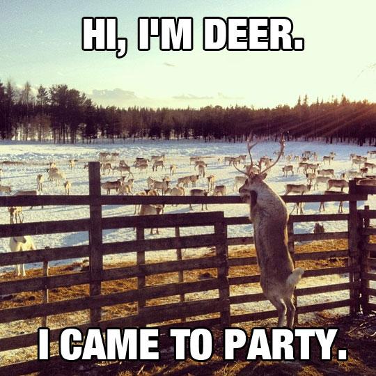 Hi, I'm Deer