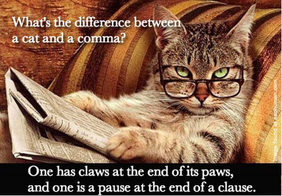 Difference Between A Cat & A Comma