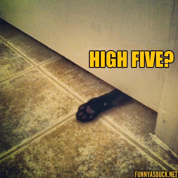 High Five?