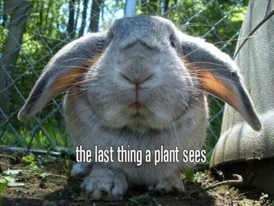 The Last Thing A Plant Sees