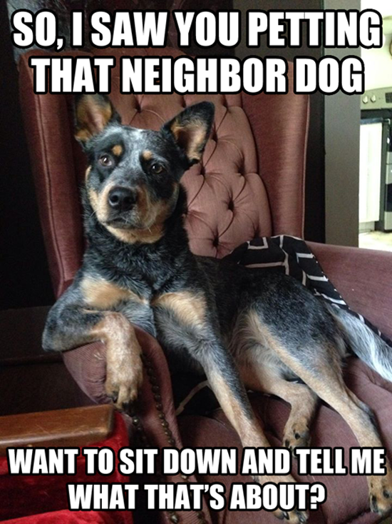The Neighbor Dog