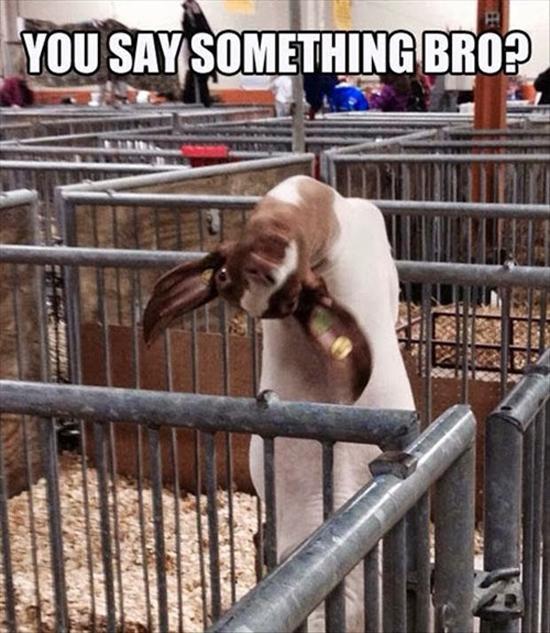 You Say Something, Bro?