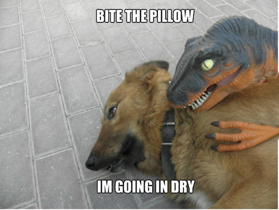 Bite The Pillow