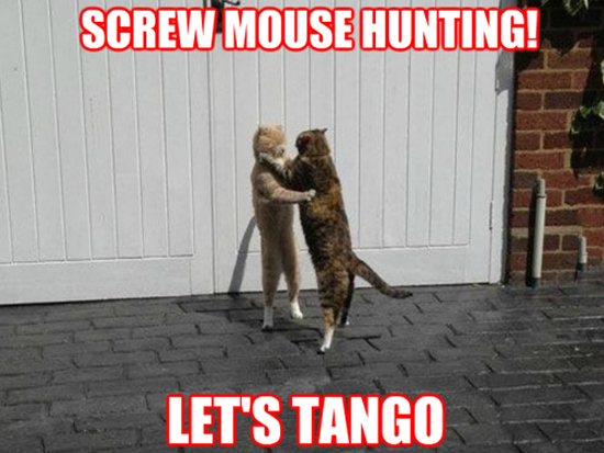 Screw Mouse Hunting
