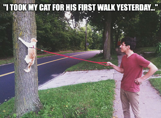 Why You Shouldn't Walk Cats