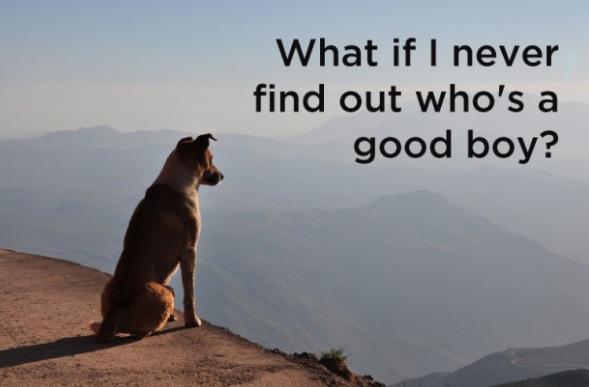 Deep Dog Thoughts