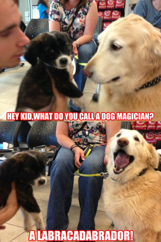 A Dog Magician