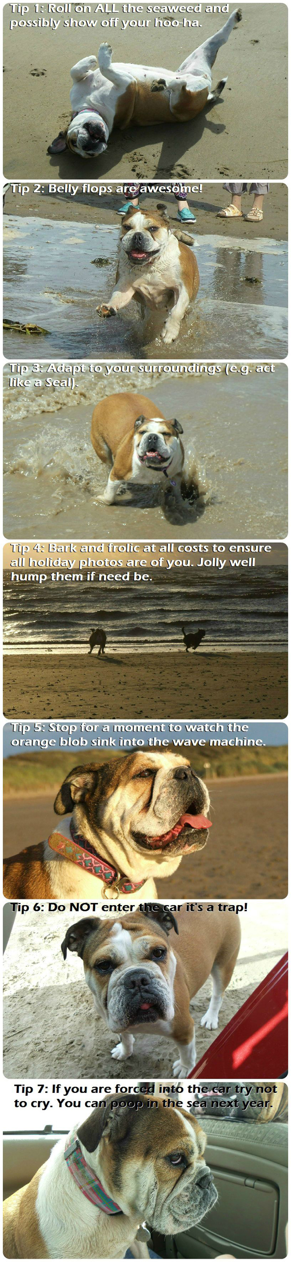 Dog's Tips For The Beach
