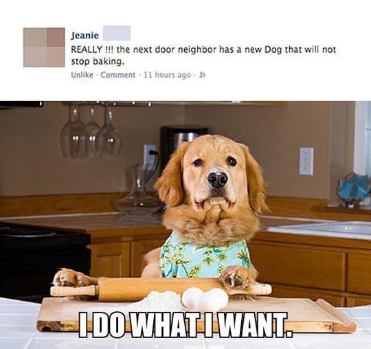 Stop Baking, Dog!